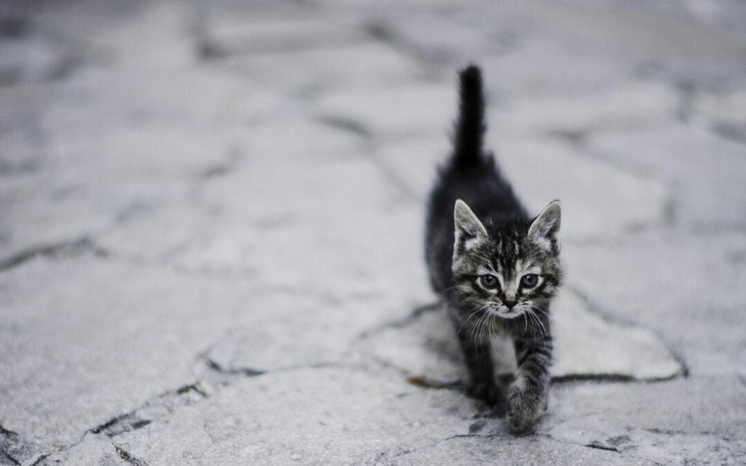 Dejar que los gatos decidan cuándo son acariciados evita la hostilidad y aumenta su afecto