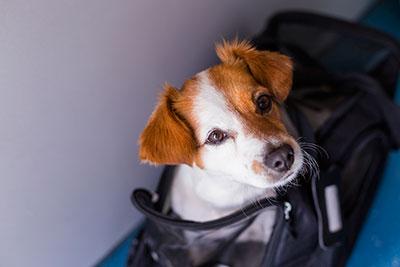 5 Estados de EEUU en alerta tras un caso de rabia en un perro importado